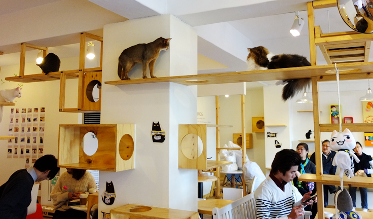 [Imagen: 20140129145442cat-cafe-to-open-in-london...d-cats.jpg]